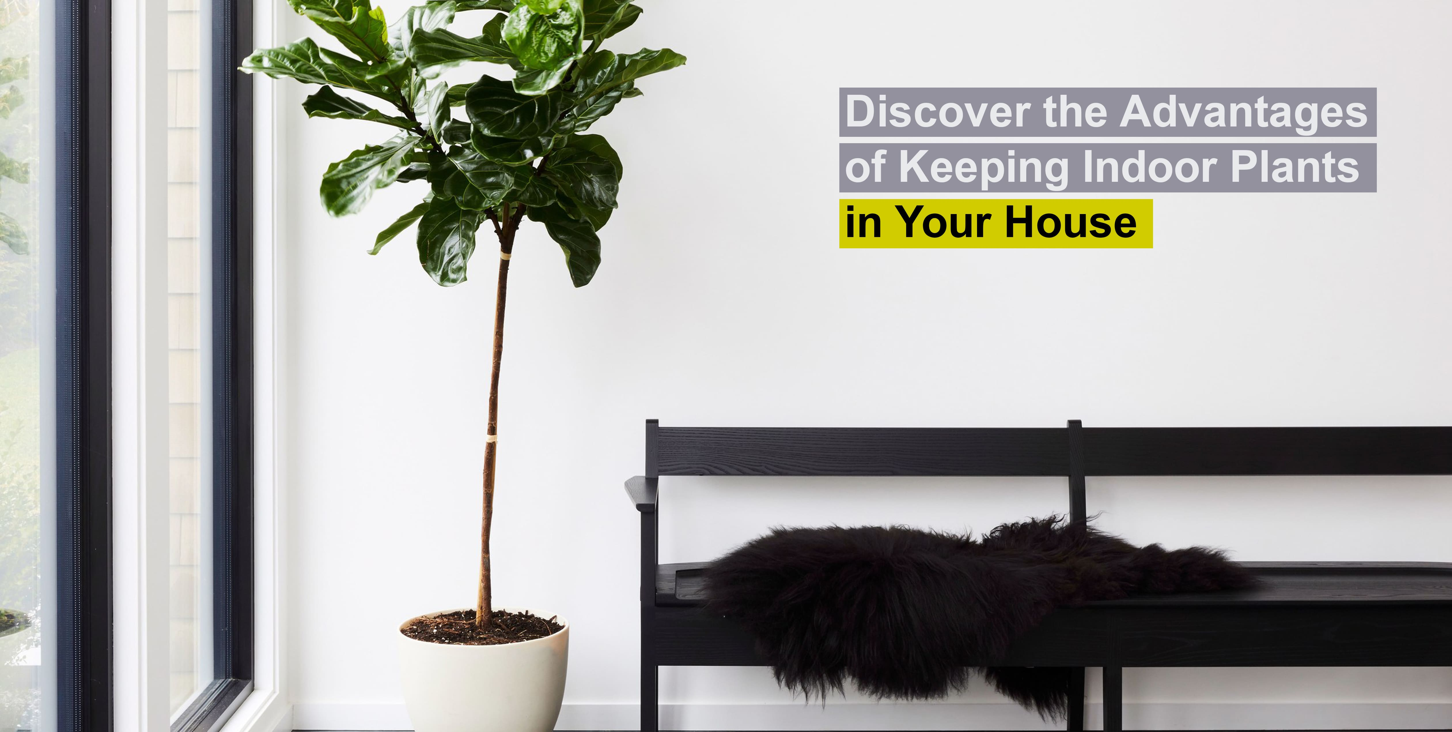 Discover the Advantages of Keeping Indoor Plants in Your House