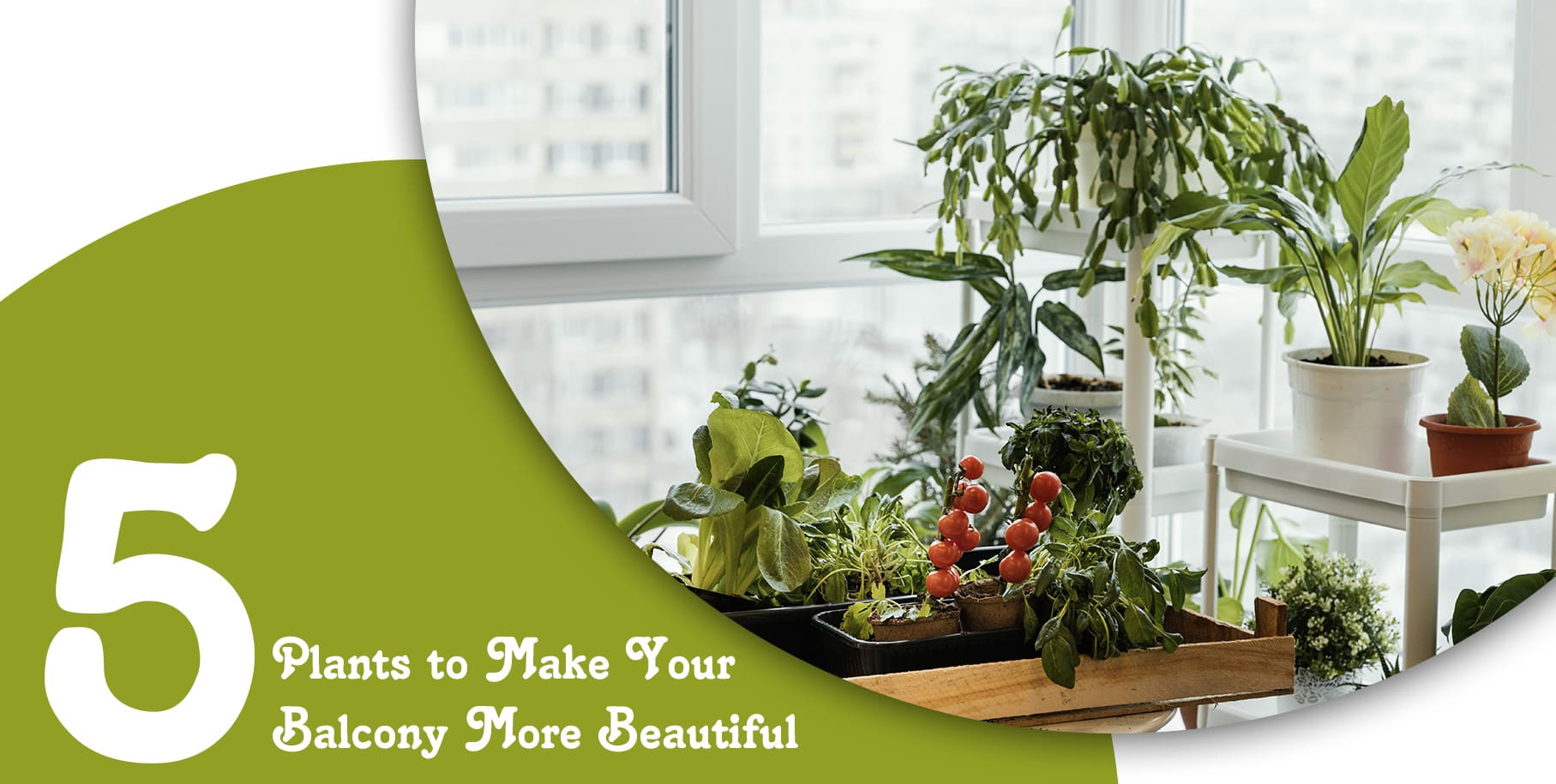 5 Plants to Make Your Balcony More Beautiful